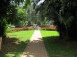 Coonoor Sim's park